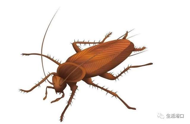 生活小竅門:家裡有蟑螂怎麼辦 防止蟑螂的方法 - 每日頭條