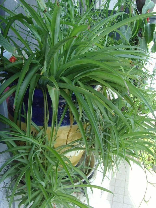 哪些綠色植物不怕熱又耐旱?這幾招幫助綠植順利度夏! - 每日頭條