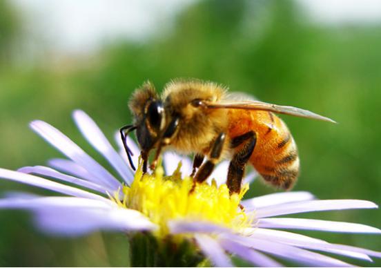 被蜜蜂蟄有什麼好處? - 每日頭條