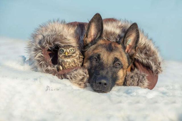 這世道亂了。狗狗居然和貓頭鷹幸福的生活在了一起! - 每日頭條