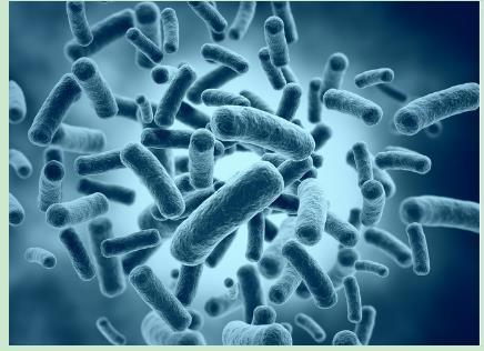 革蘭氏陽性菌和革蘭氏陰性菌選擇抗菌藥物 - 每日頭條