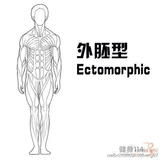 內胚型,中胚型,外胚型體質的區別 - 每日頭條