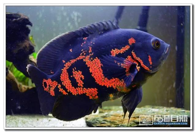 收藏 - 地圖魚飼養寶典 - 每日頭條