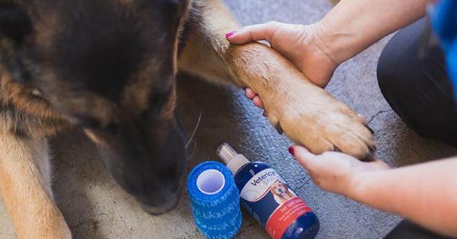 什麼是狗狗濕疹?為什麼狗狗會得濕疹?狗狗患了濕疹應該怎麼辦? - 每日頭條