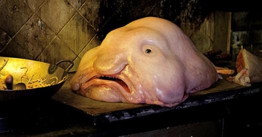 世界上最丑水滴魚是怎麼演化到一坨天生任人宰割不用去殼的肉的? - 每日頭條