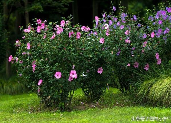 哪些花灌木適宜冬季修剪? - 每日頭條