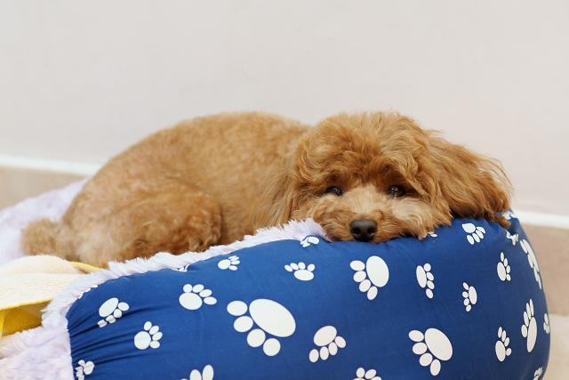 快看狗狗自己在家怎麼辦 - 每日頭條