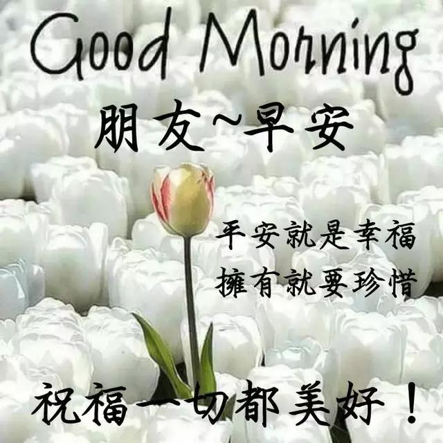 早安問候動態祝福語 最漂亮早安祝福語動態圖片帶字 - 每日頭條
