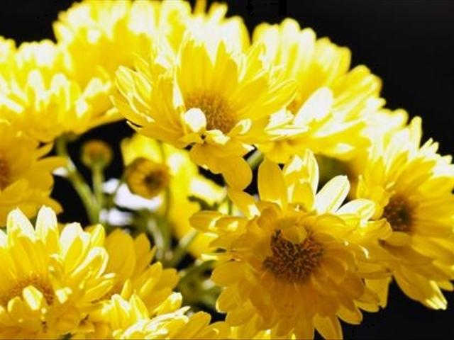這七種花都在九月份開放。你家裡有種植麼。開花鮮艷! - 每日頭條