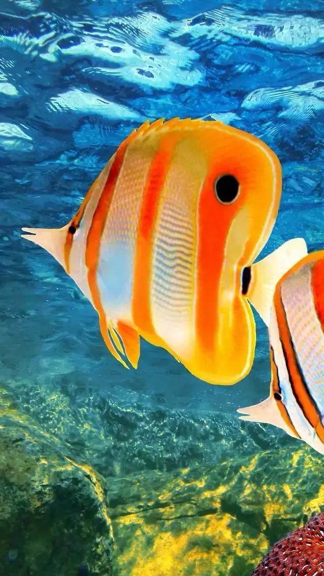 世界上極其罕見的鳥、第一美的魚。終於集齊了!快收好! - 每日頭條