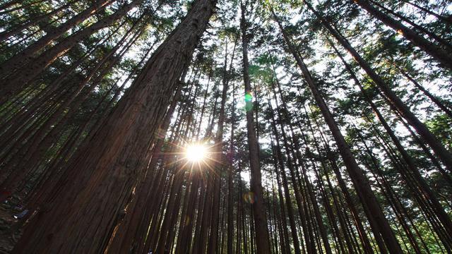 自然風光圖集:森林中的陽光 - 每日頭條