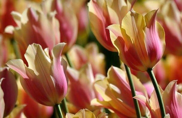 不問花開,不問花落,只為心靈的歡愉 - 每日頭條
