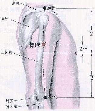 十四經絡循行圖及主要穴位簡介之手陽明大腸經 - 每日頭條