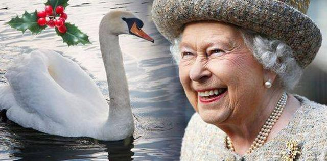 伊莉莎白女王:她會在聖誕節吃天鵝肉嗎? - 每日頭條