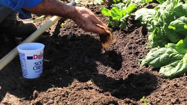 咖啡渣在養花生活中的常見用處。堆肥和驅蟲哪種適合你? - 每日頭條