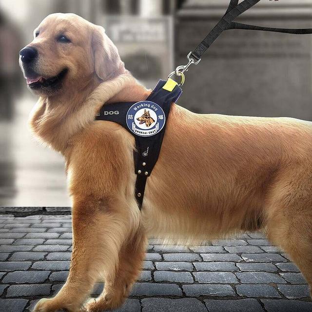 鏟屎官要知道關於狗狗牽引繩。看看這三種 - 每日頭條