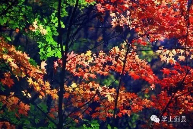 天津最全的「紅葉地圖」來了!這個秋天一起看紅葉去~ - 每日頭條