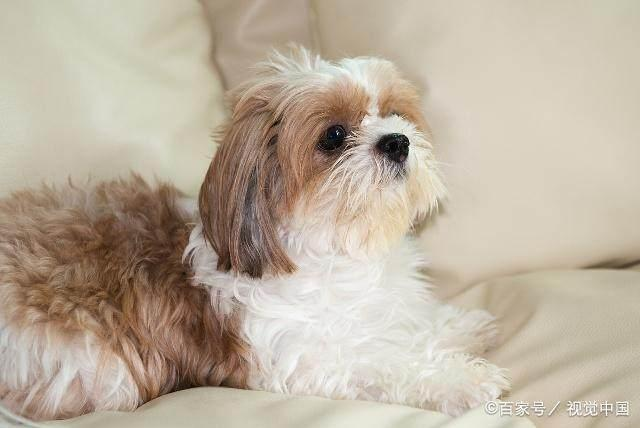 好看的狗狗有哪些?十大世界上最美的狗狗!你的愛犬排第幾? - 每日頭條