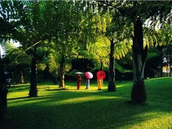 一年十二個月雲南最美風景的時間表,有你想去的地方嗎? - 每日頭條