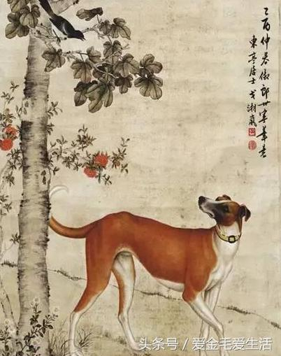 「狗」與「犬」區別你可知否?原來在古代犬狗並不是一回事 - 每日頭條