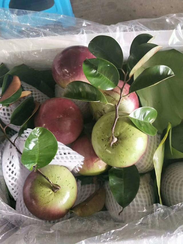 東南亞常見的幾種進口水果 - 每日頭條