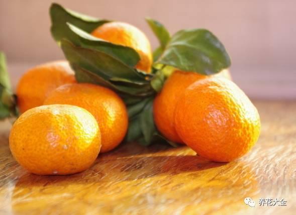 橘子籽,種在花盆裡就能長出個小盆栽! - 每日頭條