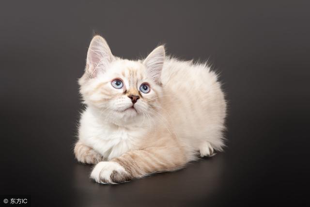 貓咪打噴嚏就是感冒了?錯!當心病毒感染! - 每日頭條