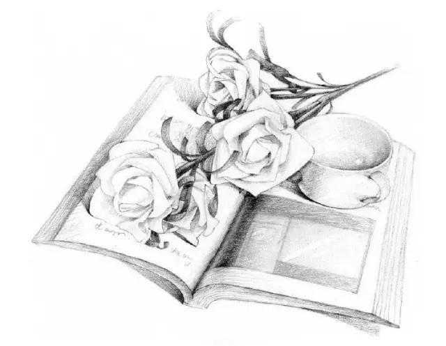素描入門,素描學習,素描教程:教你畫白玫瑰送女朋友 - 每日頭條