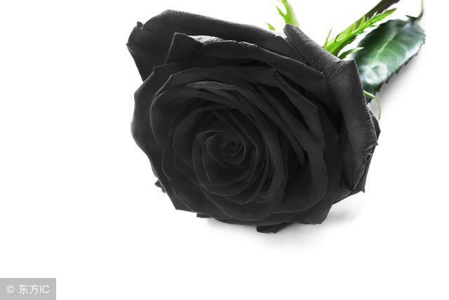 花並非紅色的才會讓人驚艷,盤點世界上8種奇異的黑色花 - 每日頭條