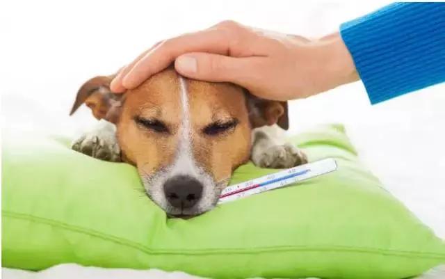 狗狗拉稀的7大常見原因及治療方法 - 每日頭條