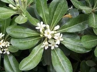 植物百科|快來選一些植物。凈化你的空氣吧!(青友福利) - 每日頭條