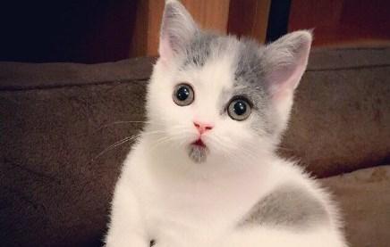 小貓總是咬人怎麼辦?怎麼來糾正 - 每日頭條