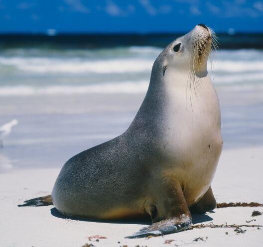 到底是什麼?讓毫不起眼的海豹成為南極食物鏈頂端的獵食者 - 每日頭條