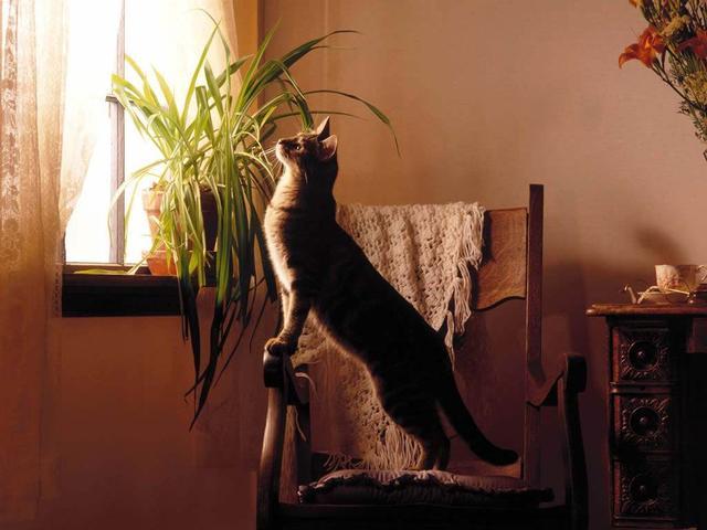 貓咪喜歡的生活環境該是什麼樣的呢 - 每日頭條