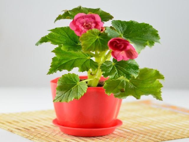 這5種花卉植物。澆水別澆在葉子上。否則一周就爛葉! - 每日頭條