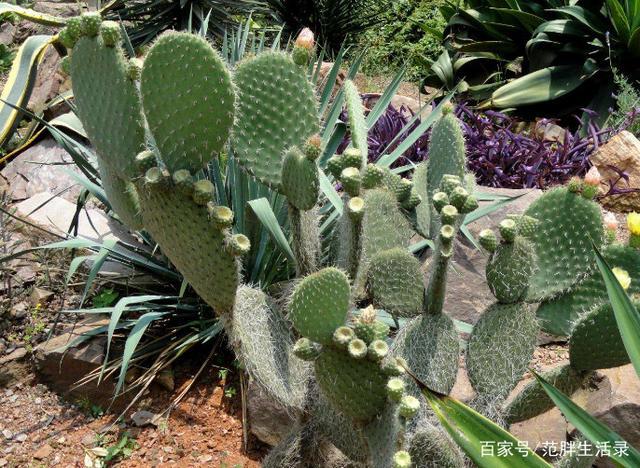 如何種植活石植物,其實很簡單,只是大家都不知道罷了 - 每日頭條