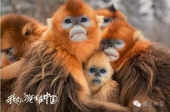 《我們誕生在中國》一部沒有人類參演卻萌爆的電影 - 每日頭條