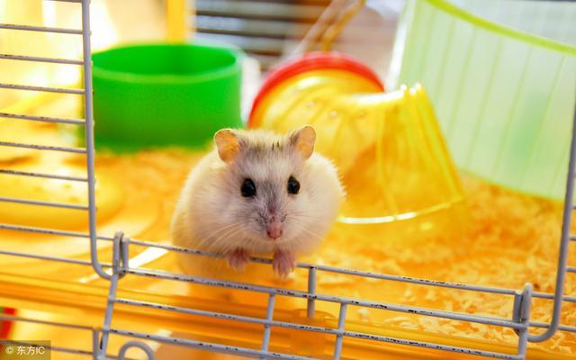 養倉鼠需要什麼用品 養倉鼠需要的8類用品 - 每日頭條