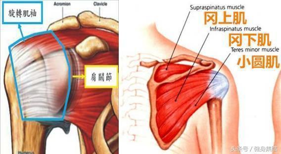 旋轉肌群強化增強肩部訓練安全:5個動作提升肩部自我保護能力 - 每日頭條