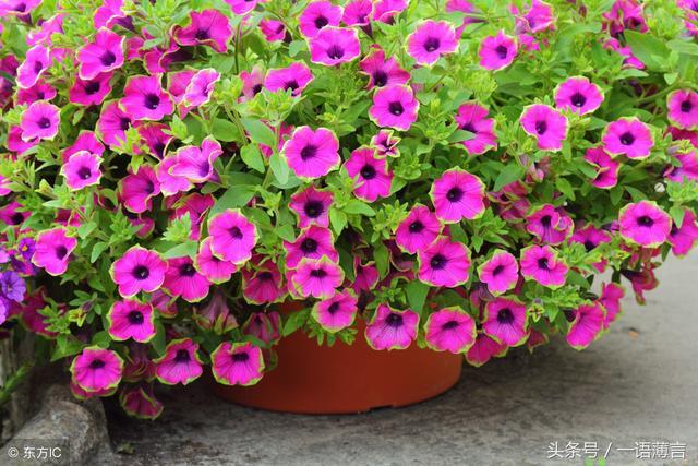 現在中國各地都有種植,喜陽光充足,耐半陰,你們知道是什麼嗎? - 每日頭條