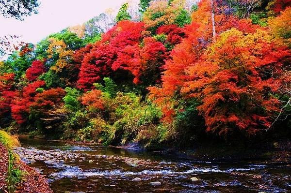 日本「紅葉狩」|秋色染霓虹。賞楓正關東 - 每日頭條