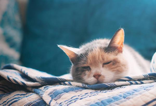 被貓抓傷會得狂犬病嗎 被貓狗咬傷後正確處理方法是什麼 - 每日頭條