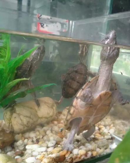 給新手龜友推薦的品種 - 每日頭條