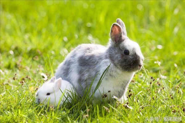 侏儒兔好養嗎? - 每日頭條