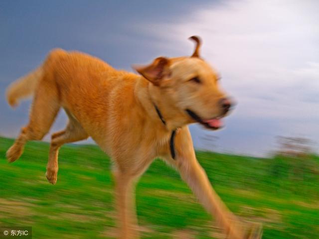 牽狗散步的時間和次數要有規律 - 每日頭條