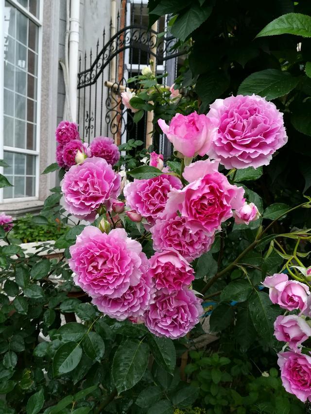 最值得養的花,種植容易,漂亮不輸牡丹玫瑰,四季開花,花香四溢 - 每日頭條