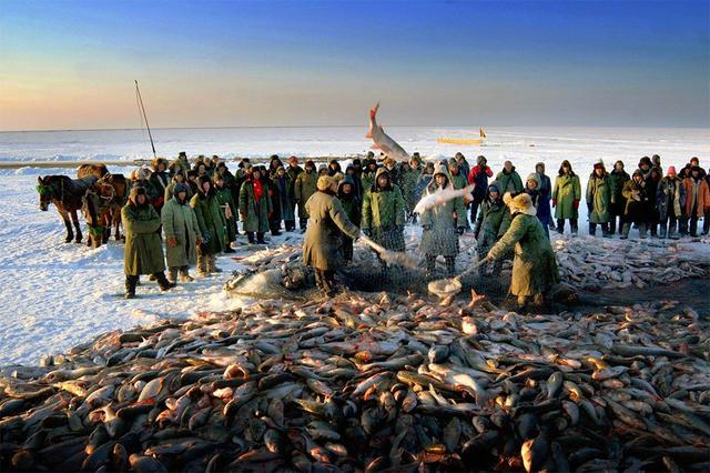 東北農村查干湖冬捕,漁民大豐收魚王拍賣上百萬,做夢都在笑 - 每日頭條