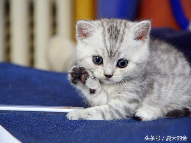 你注意到了嗎?為什麼貓咪經常流淚,打噴嚏,流鼻涕 - 每日頭條