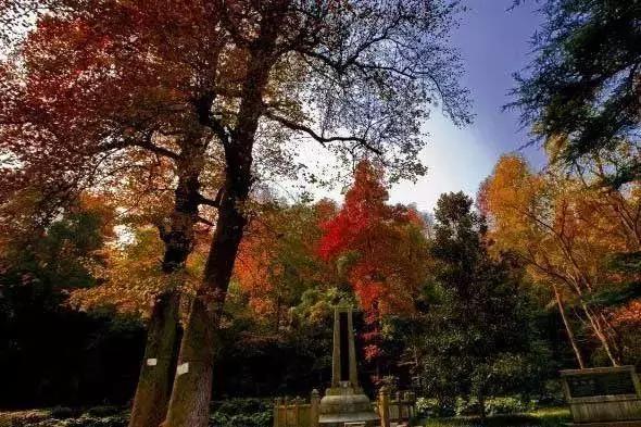 獨領「楓」騷 11月國內賞楓最佳目的地 看看江蘇有哪些上榜 - 每日頭條