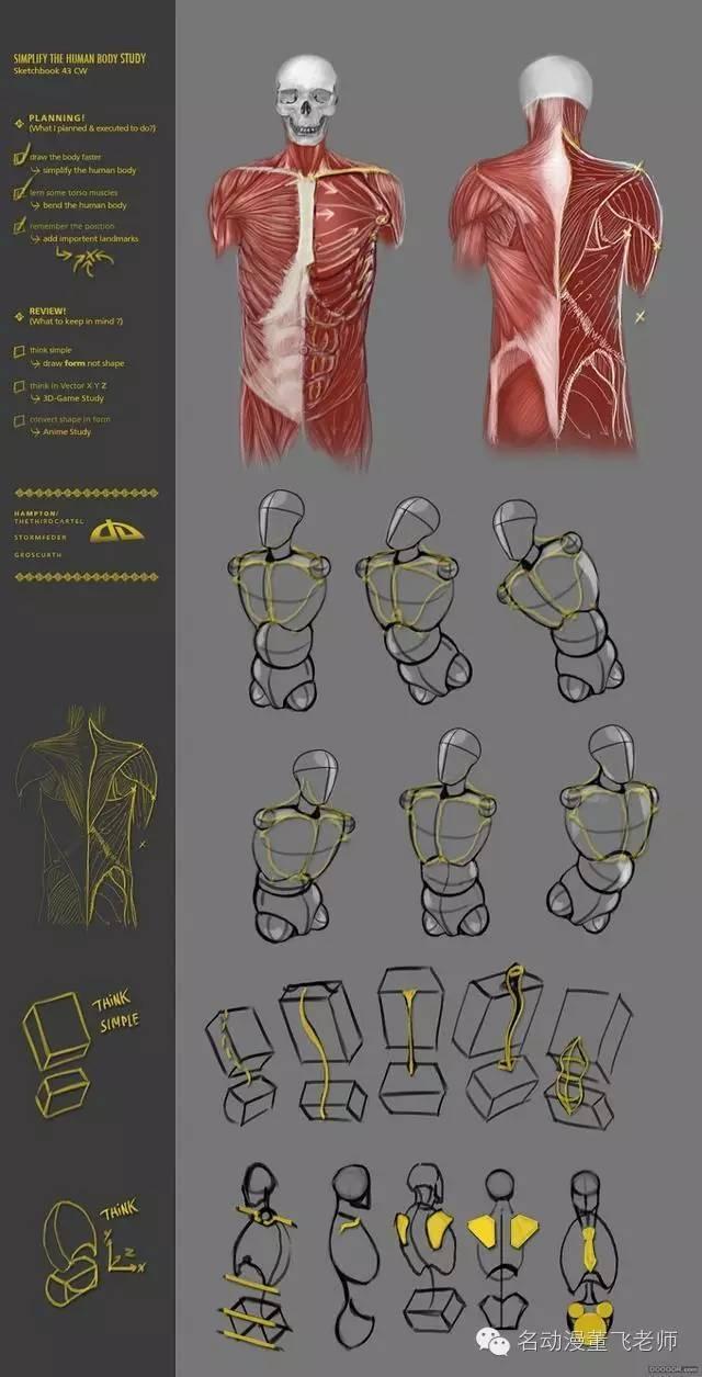 人體結構畫法之肩部-胸腔-背部動作參考 - 每日頭條